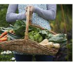 sustainable-solution-backyard-farming